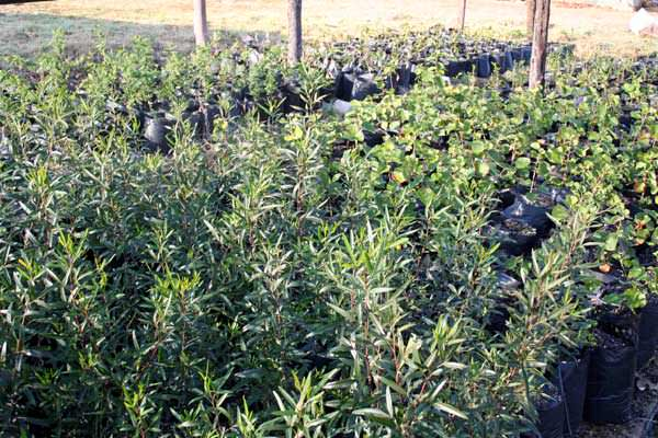 A Wide Variety Of Indigenous Trees Are Grown Suited To Various Climates Delivery Is Available Nationwide For More Information On These Products