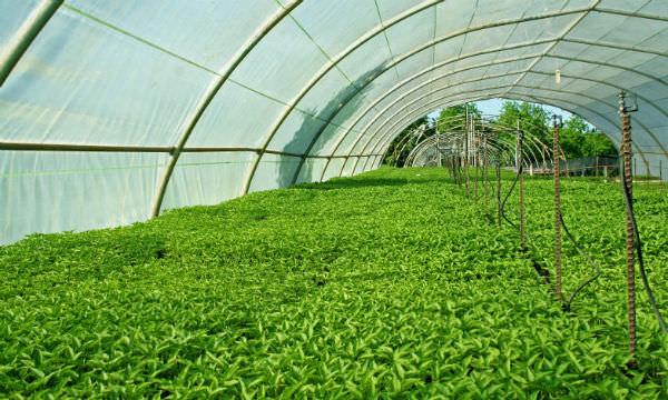 Sutherland Seedlings Products - Sutherland Seedlings