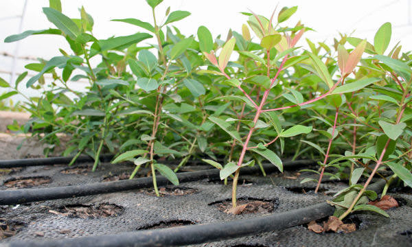 Sutherland Seedlings Products